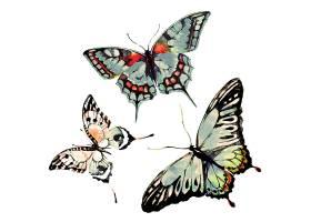 三只美丽的水墨画蝴蝶