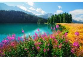 池塘与花的景色