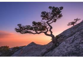 日落与松树美景