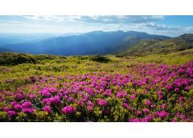 山与花的美景