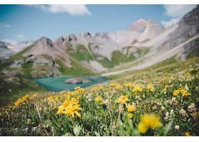 岩山与野花美景