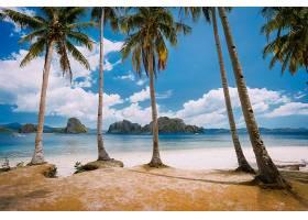 岛屿棕榈树美景