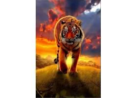 老虎与日落