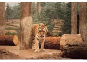 树林里的熊虎