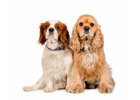 两只宠物狗