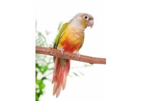 树枝上行绿色鹦鹉
