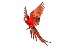美丽的飞鸟