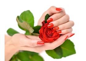 手上的玫瑰花