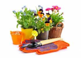 鲜花与工具