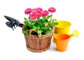 园艺工具与雏菊
