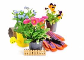 园林工具与三盆盆栽