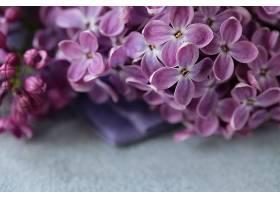 粉紫色的花