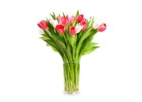 花瓶里彩色郁金香