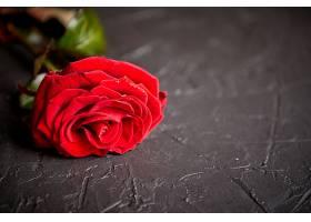 一枝红玫瑰花
