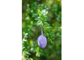 树枝上紫色复活节彩蛋