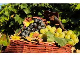 食物,葡萄,水果,壁纸(36)