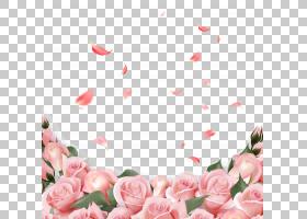 花瓣PNG免抠素材 (108)