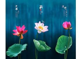 中国风荷花水墨背景图片