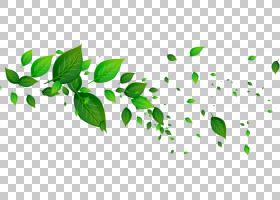 绿色叶子PNG免抠素材 (38)