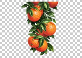 新鲜水果PNG免抠素材 (92)