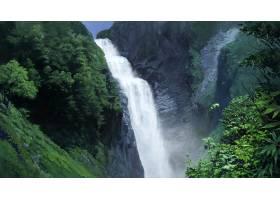 电影,狼,孩子们,瀑布,森林,日本动漫,风景,日本,壁纸