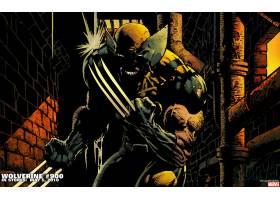 漫画壁纸,金刚狼,x战警,漫画壁纸,超级英雄,壁纸(8)