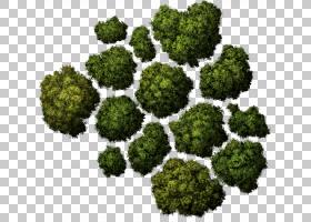 树计算机图标建筑,树顶树,草装饰PNG剪贴画杂项,叶蔬菜,风景,其他