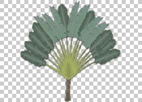Arecaceae计算机图标,其他PNG剪贴画计算机网络,3D计算机图形学,