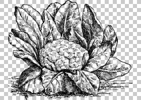 菜图画食物,被绘的花椰菜PNG clipart水彩画,叶,手绘花,单色,生日