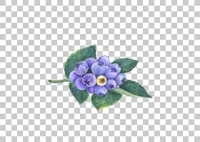蓝莓水彩画膳食补充剂,美丽的手绘蓝莓PNG剪贴画紫色,草本植物,花