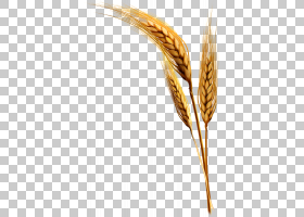 Emmer Einkorn小麦杜伦麦,小麦植物材料拉PNG剪贴画免费Logo设计