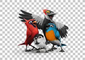 Macaw Bird Feeders康奈尔鸟类学自然研究实验室;鸟,鸟PNG剪贴画