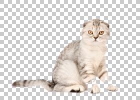 苏格兰折叠小猫鼠标抓猫猫树,动物猫PNG剪贴画哺乳动物,猫像哺乳