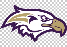 费城老鹰队标志,老鹰PNG剪贴画紫色,动物,脊椎动物,虚构人物,鸟,