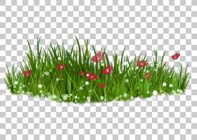 花草坪,绿草PNG剪贴画画,手,草,花园,青苹果,鲜花,绿茶,春天,郁金