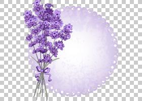 英国薰衣草花,薰衣草PNG剪贴画紫色,紫罗兰色,免版税,封装PostScr
