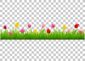 鹦鹉郁金香花,与五颜六色的郁金香的草,郁金香PNG clipart水彩画,