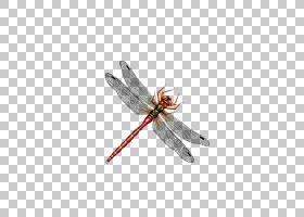 蜻蜓昆虫计算机文件,蜻蜓PNG剪贴画昆虫,蜻蜓与花,蜻蜓翅膀,水彩