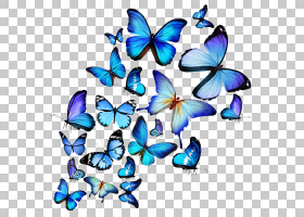 蝴蝶股票摄影皇室 - 绘图,彩绘蝴蝶PNG剪贴画水彩画,蓝色,刷脚蝴