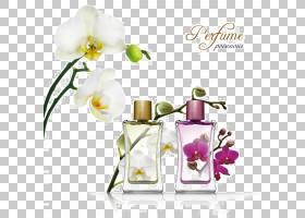 调香师淡香水IPRA香水香气化合物,精致的小瓶PNG剪贴画紫色,玻璃,