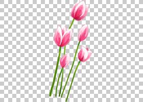 郁金香粉红色的花瓣,粉红色的郁金香PNG剪贴画画,手,植物茎,郁金