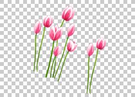 郁金香花瓣粉红色,粉红色郁金香PNG剪贴画植物茎,花,封装PostScri