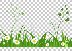 雏菊与草,白花PNG剪贴画电脑壁纸,花卉,洋甘菊,桌面壁纸,春天,野
