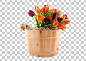 鲜花花束Floristry郁金香国际妇女节,木桶颜色郁金香PNG剪贴画颜