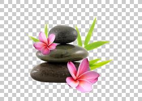 花卵石禅纸花园玫瑰,赤素馨花PNG剪贴画摄影,桌面壁纸,美容师,替图片