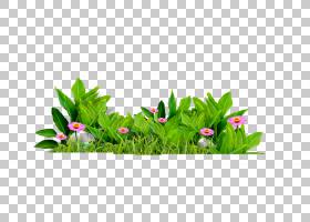 花叶,美丽精致的花朵鲜草PNG剪贴画电脑壁纸,草,罚款,鲜花,郁金香