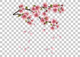 花瓣,美丽的粉红色春天分支与落花瓣,粉红色的樱花b PNG剪贴画水
