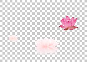 花瓣图案,莲花PNG剪贴画花,金莲花,莲花,白莲花,莲花矢量,桃花,性图片