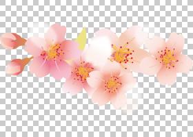 花瓣樱花樱桃,樱桃花瓣PNG剪贴画插花,分支,花卉,水果坚果,牡丹,图片