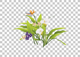 花艺设计鲜花花束,草PNG剪贴画的新鲜绿叶紫色,草本植物,水彩叶子